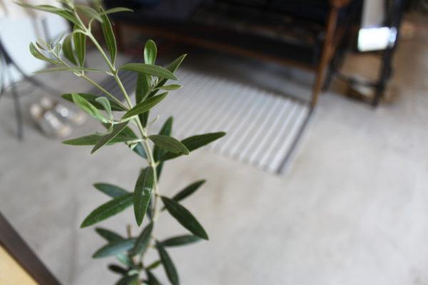 店内植物②